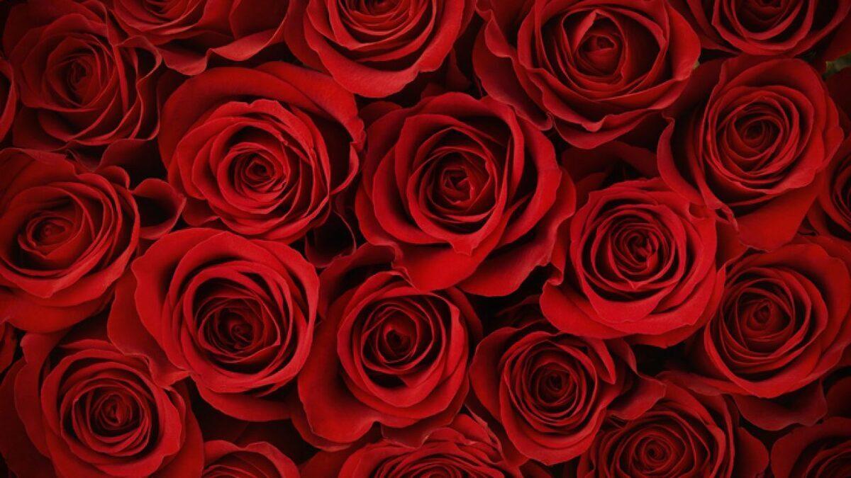 Maggio, il mese della rosa e dell'amore: perché?